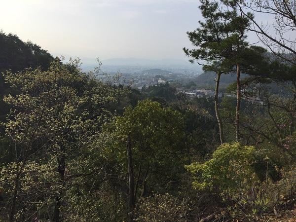 京見峠唯一の京都を見下ろせる場所。