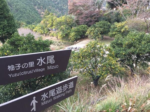 水尾の柚子園
