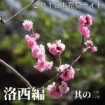 2018お花見ライド ~洛西編その二~