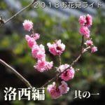 2018お花見ライド ~洛西編その一~