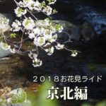 2018お花見ライド ~京北編~