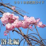 2018お花見ライド ~洛北編~