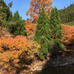 2018京都の紅葉を自転車で楽しむライドEpisode1