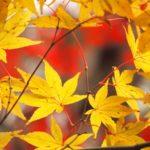 2018京都の紅葉を自転車で楽しむライドEpisode3